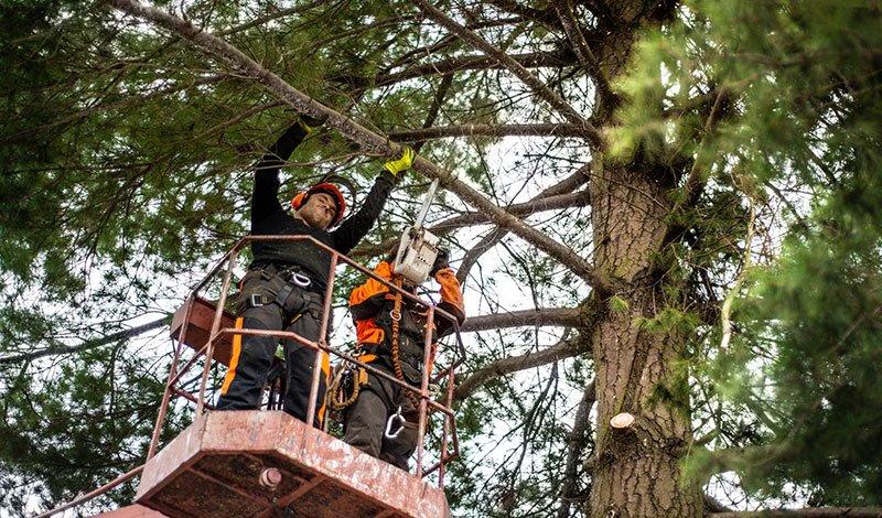 Fresno Arborist Service