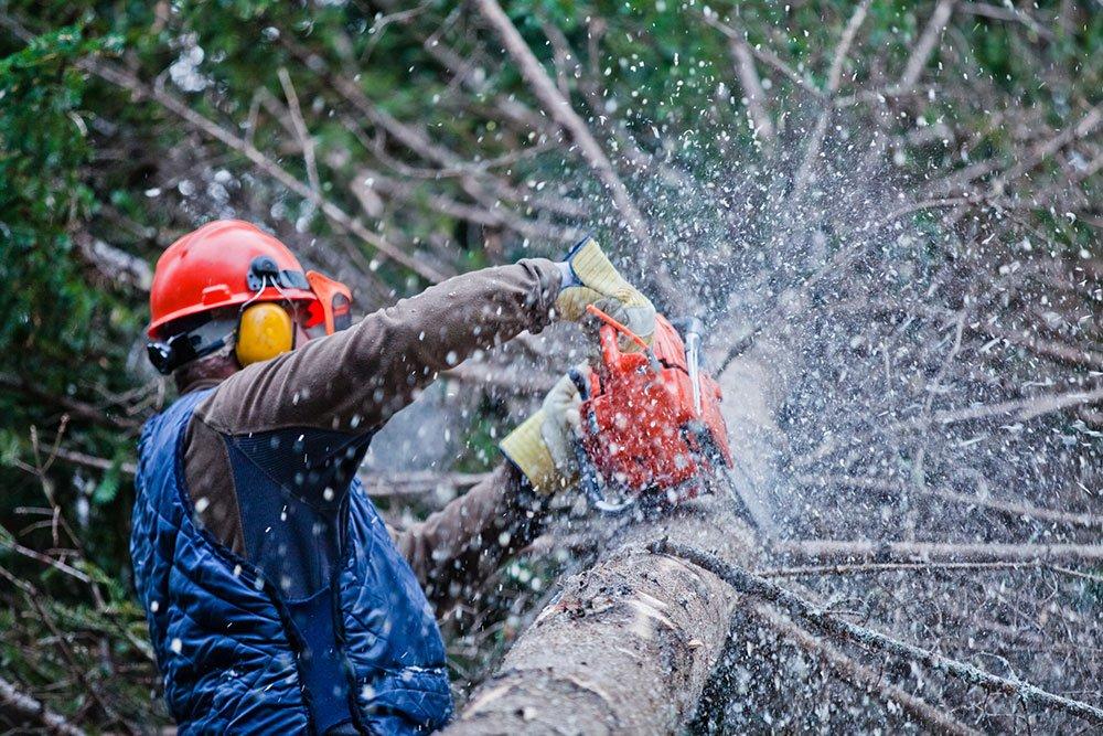 Fresno Tree Removal