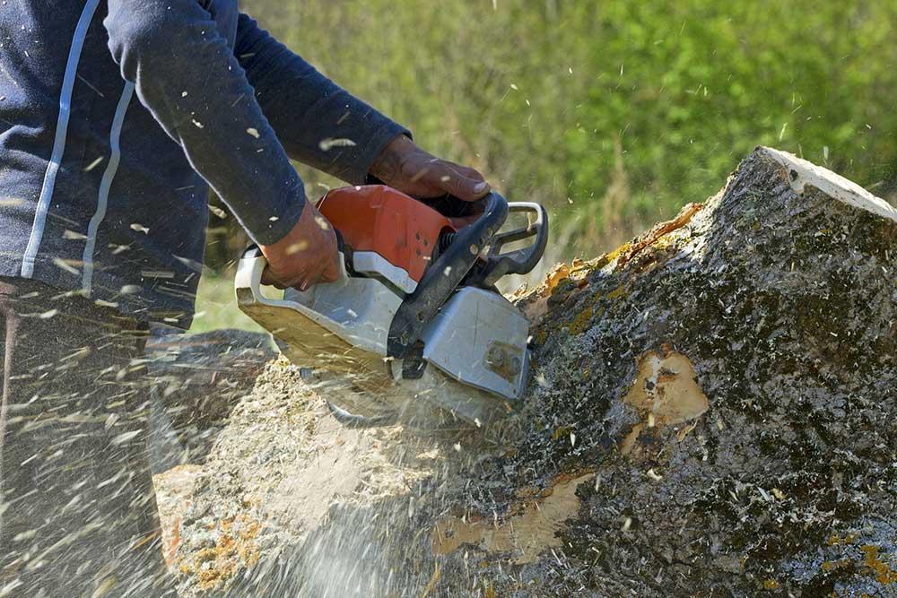 Tree Service Fresno - Tree Removal