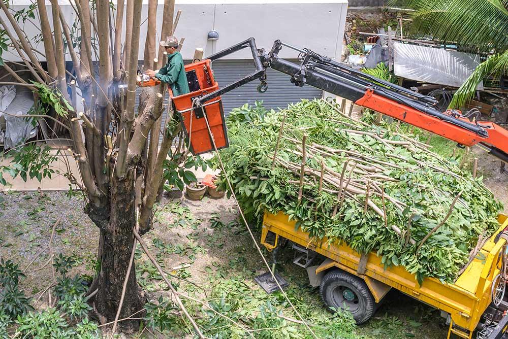 Tree Service Fresno - Tree Trimming