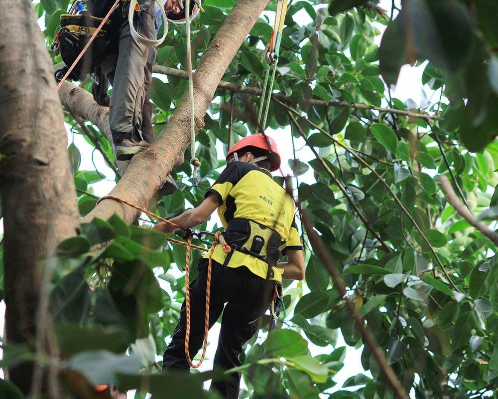 Fresno Tree Trimming